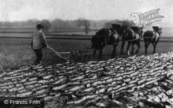 Ploughing c.1900