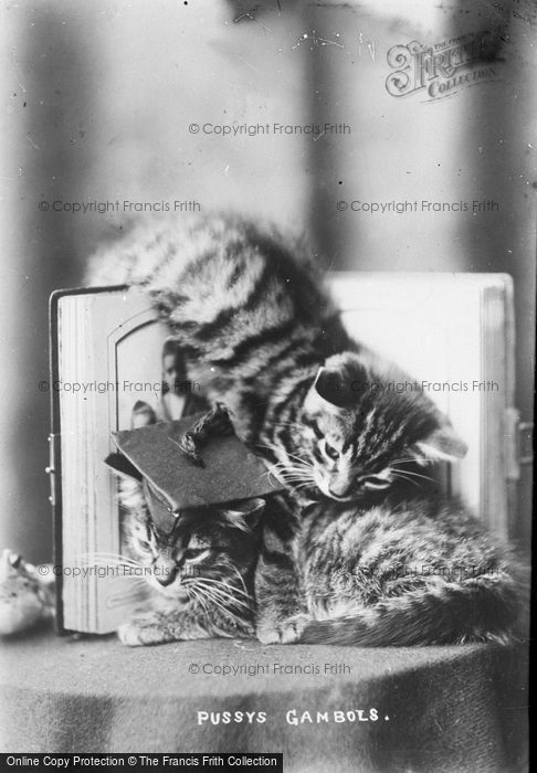 Photo of Pussy Gambols c.1890