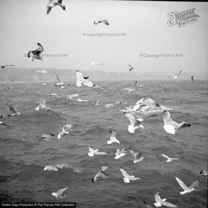 Photo of Sea Birds