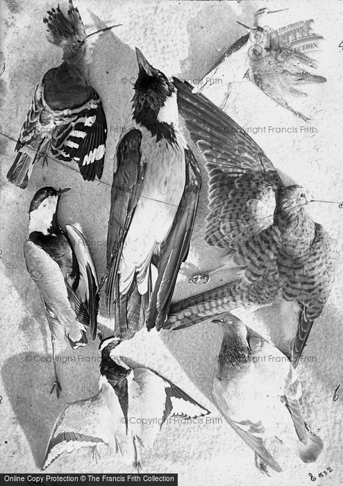 Photo of Still Life No 2 c.1866
