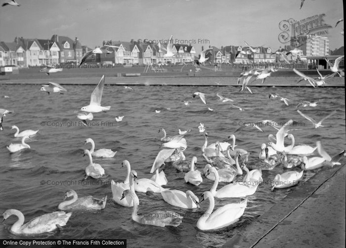 Photo of Swans
