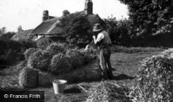 Thatching, Preparing The Reed c.1910