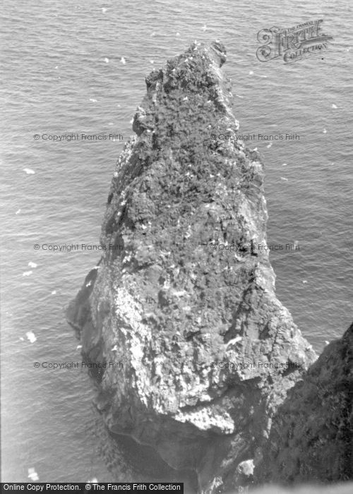 Photo of St Abbs, Bird Life c.1935
