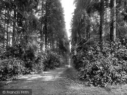 St Leonards Forest, Church Path, Holmbush 1927
