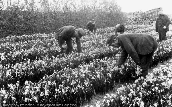 Photo of St Mary's, Narcissus Flower Farm c.1891