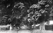 Stevenage, the Avenue 1899