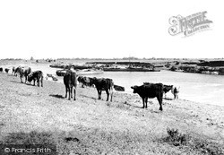 Sutton-on-Trent, The River Trent c.1955, Sutton On Trent