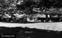 Deer In The Grounds c.1960, Swinton Park