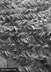 Tamworth, Castle, Herring Bone Masonry 1953