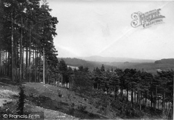 Pines On Fold Hill 1909, The Bourne