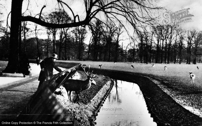 Photo of The Hague, Deer Park c.1930