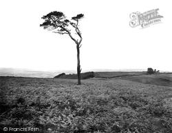 "The Quantocks, ""Alone On The Quantocks"" On Fire Beacon Hill 1929, Quantock Hills"