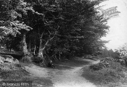 The Quantocks, Beeches, Cocker Combe 1906, Quantock Hills