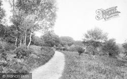 The Quantocks, Edge Of Cocker Combe 1906, Quantock Hills