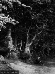 The Quantocks, Sitting Under The Beeches, Cocker Combe 1906, Quantock Hills
