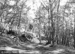 The Wrekin, The Forest Glen c.1955