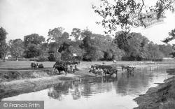 Water Meadows 1921, Thetford