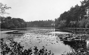 Thursley, Forked Pond 1925