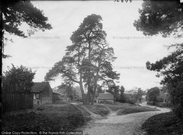 Photo of Thursley, The Firs 1923