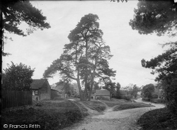 Thursley, The Firs 1923