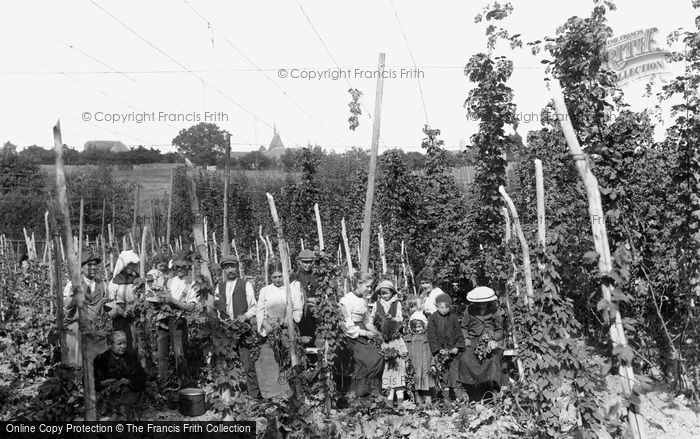 Photo of Ticehurst, Hop Pickers 1907
