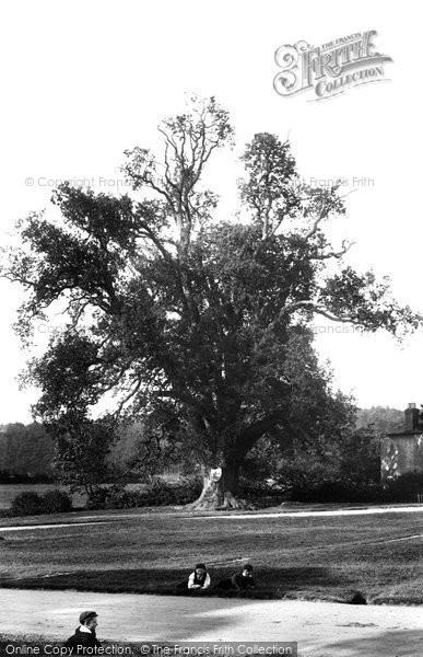 Photo of Tilford, Kings Oak 1906