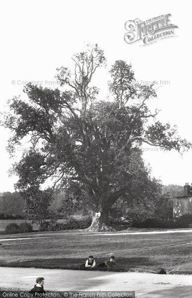 Photo of Tilford, Kings Oak 1906