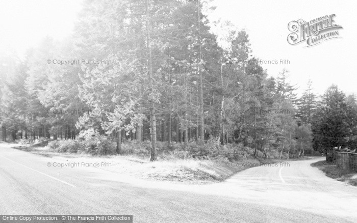 Photo of Tilford, The Woods c.1955