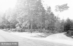 Tilford, The Woods c.1955