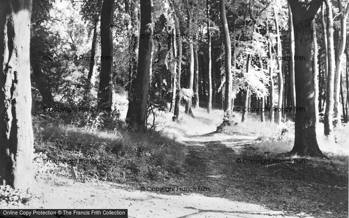 Photo of Tring, Stubbins Wood c.1950