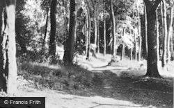Tring, Stubbins Wood c.1950