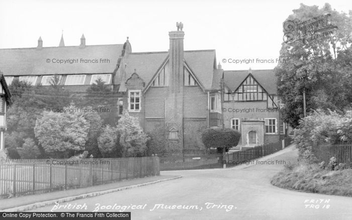 Photo of Tring, The British Zoological Museum c.1955