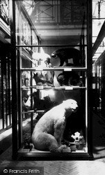 Tring, The Zoological Museum, Ground Floor c.1955
