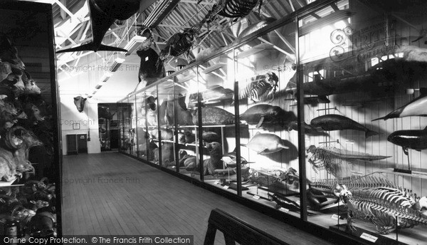 Photo of Tring, The Zoological Museum, Top Floor c.1955
