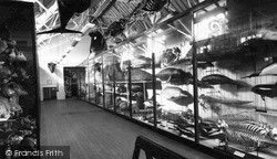 Tring, The Zoological Museum, Top Floor c.1955