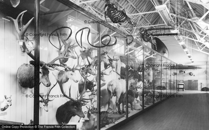 Photo of Tring, Tring Museum, The Top Floor c.1955