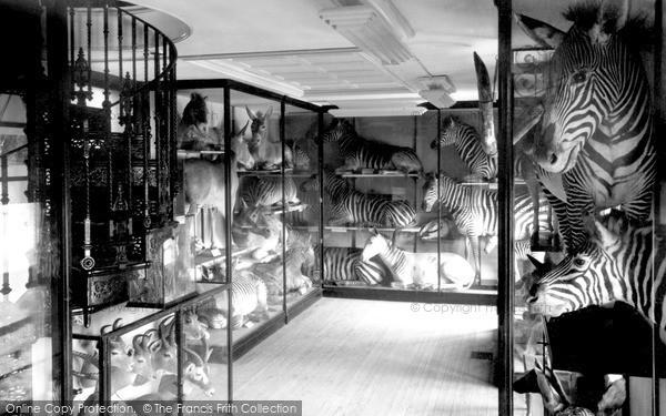 Photo of Tring, Zebra Room, Tring Museum c.1955
