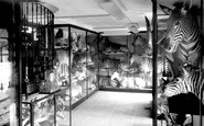 Tring, Zebra Room, Tring Museum c1955