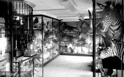 Tring, Zebra Room, Tring Museum c.1955