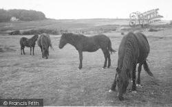 Two Bridges, Dartmoor Ponies c.1960