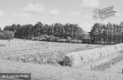 Twyford, The Floral Mile c.1965