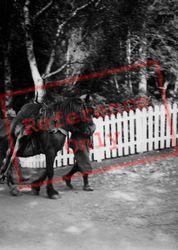 Horse Carrying Deer c.1939, Ullapool