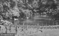 Upminster, Swans And Cygnets c.1955