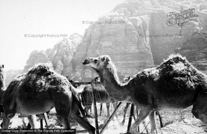 Photo of Wadi Rum, Desert Patrol Camels 1965