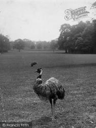 Warnham Court, An Emu 1924, Warnham