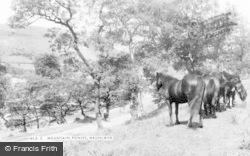 Waunlwyd, Mountain Ponies c.1955