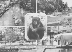 Wellingborough, Composite, Zoo Park c.1965