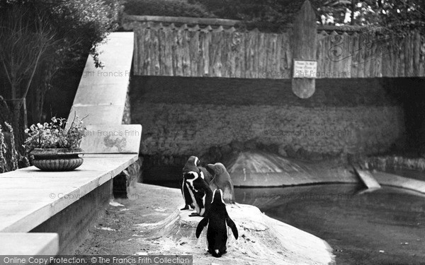 Photo of Wellingborough, Zoo Park, The Penguins c.1950