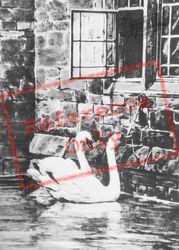 Wells, The Swans c.1950