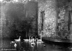 Wells, The Swans On The Palace Moat c.1920